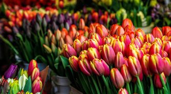 Tulips in Amsterdam market