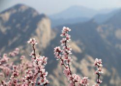 Xian Blossom