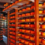 Cheese_tasting_Amsterdam