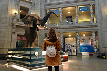 Students looking at Henry the elephant at the Smithsonian