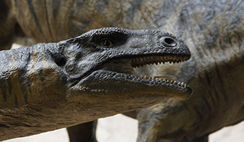 Prehistoric times exhibitions