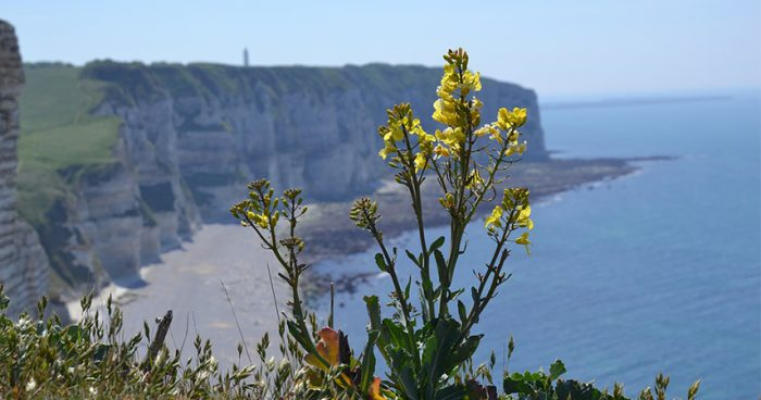 normandy_coast