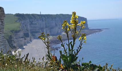 normandy_coast_flowers