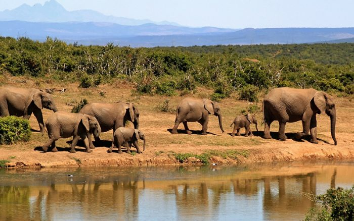 elephants_south_africa
