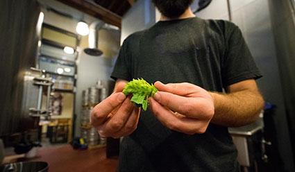 Brewery tour describing the process
