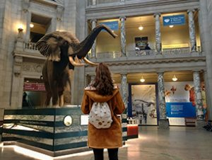 Museum of Natural History - The Smithsonian Institution